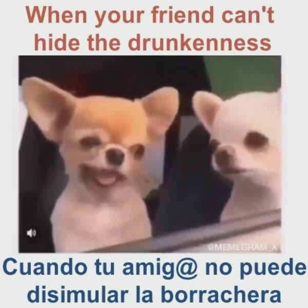 Tenemos Q Aprender Ingles Funny Phrases Funny Memes Humor
