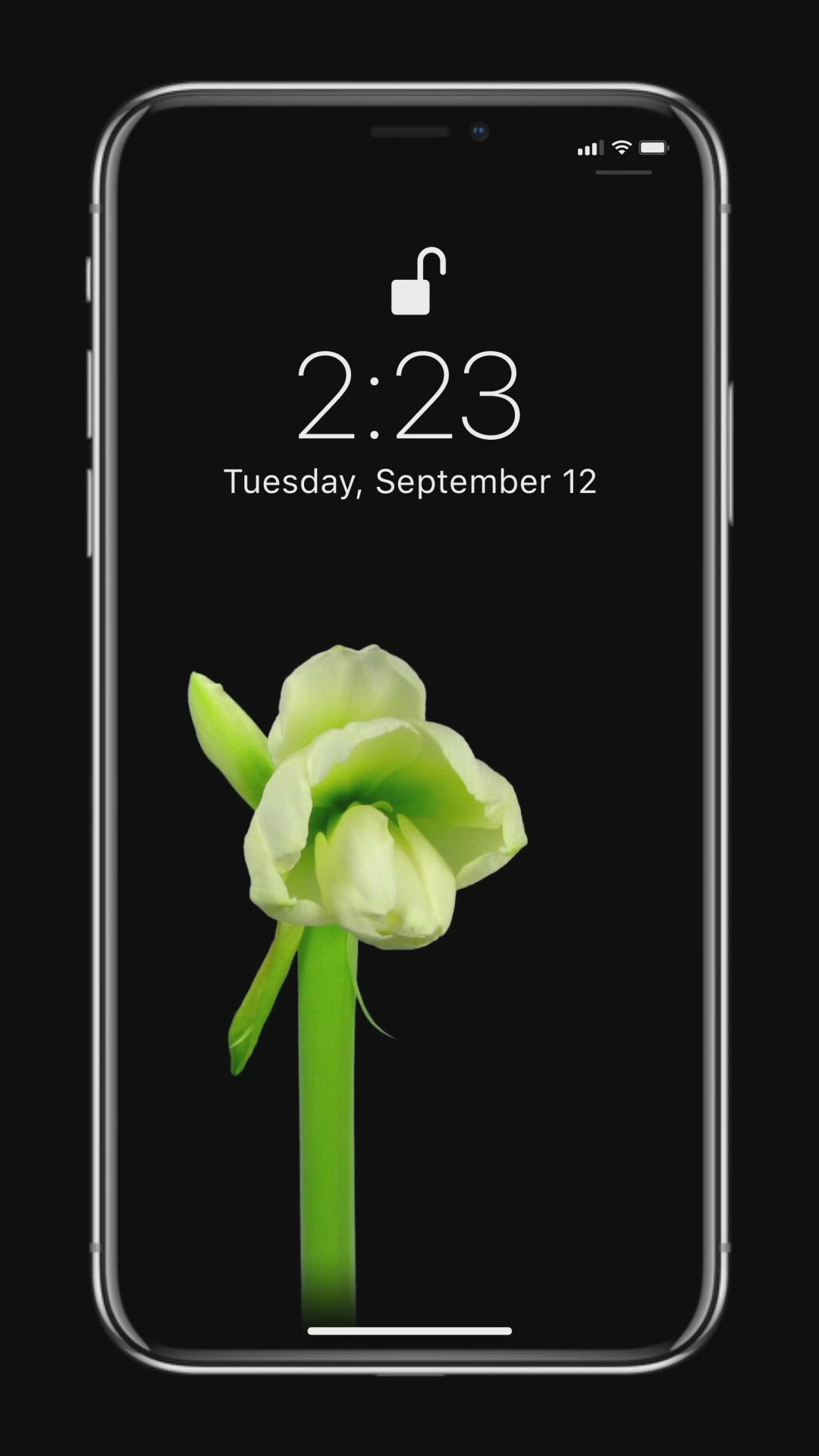 Collection Of Flower Wallpapers Video Flower Iphone Wallpaper Flower Phone Wallpaper Beautiful Wallpapers For Iphone