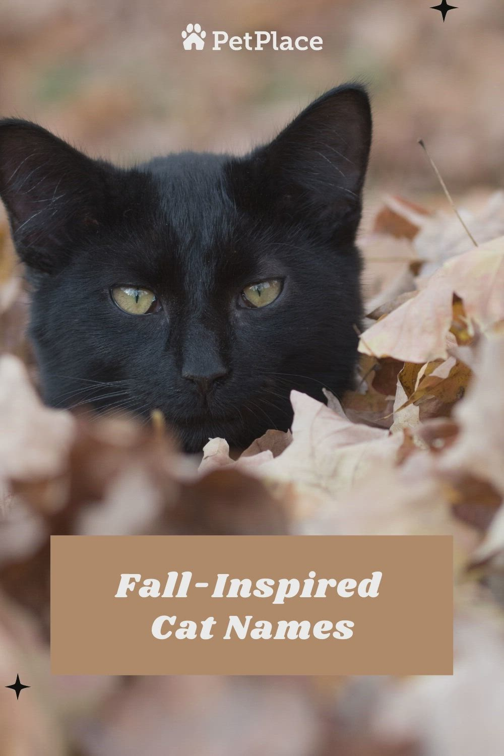 Fall Inspired Cat Names Video In 2020 Pets Kittens Cutest Pet Adoption