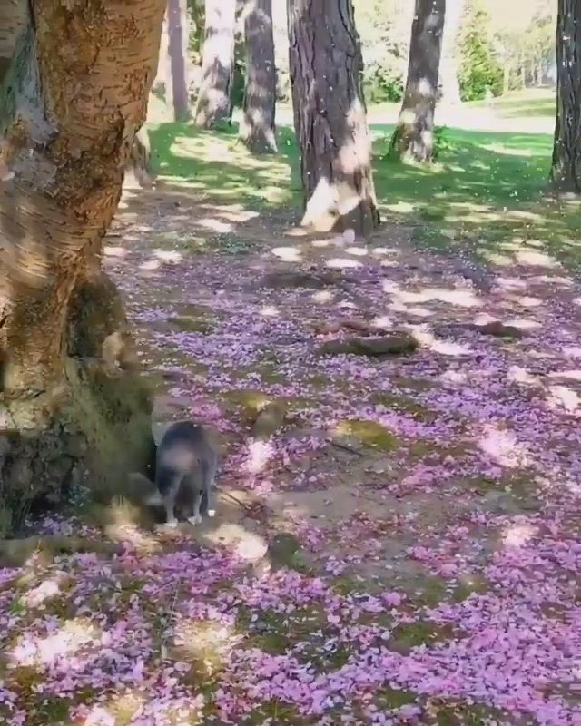 Cherry Blossom Wonderland Video Puppies Funny Cute Cats All About Cats