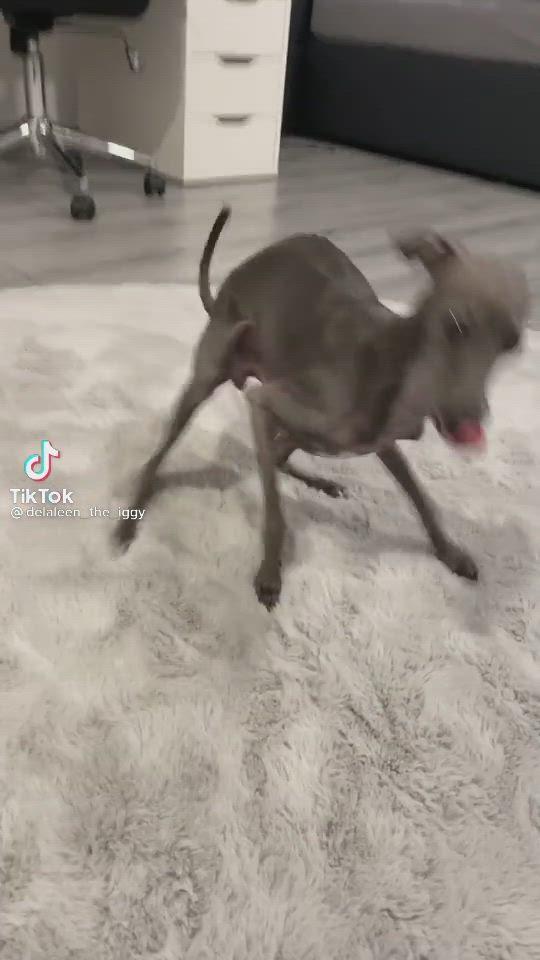No Petting Video In 2021 Funny Animal Videos Animal Jokes Dog Memes