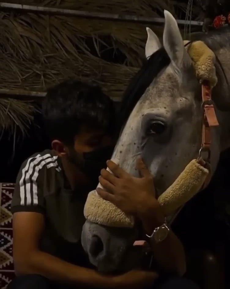 مشتاق لك والشوق يقتل م حبين ليت العيون اللي قبالگ عي وني Video Horse Girl Photography Cover Photo Quotes Horse Girl