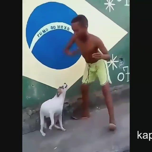 Dog And Man Is Dancing Video Perro Bailando Perro Y Gato Juntos Perros Graciosos