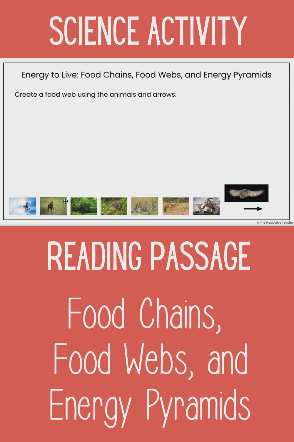 Food Chains And Food Webs Middle School Science Reading Passage Video Video Reading Passages Science Reading Passages Science Reading [ 1500 x 1000 Pixel ]