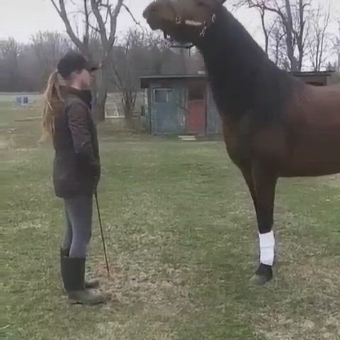 Tiktok With Horse Video Funny Horse Videos Funny Horses Horse Life