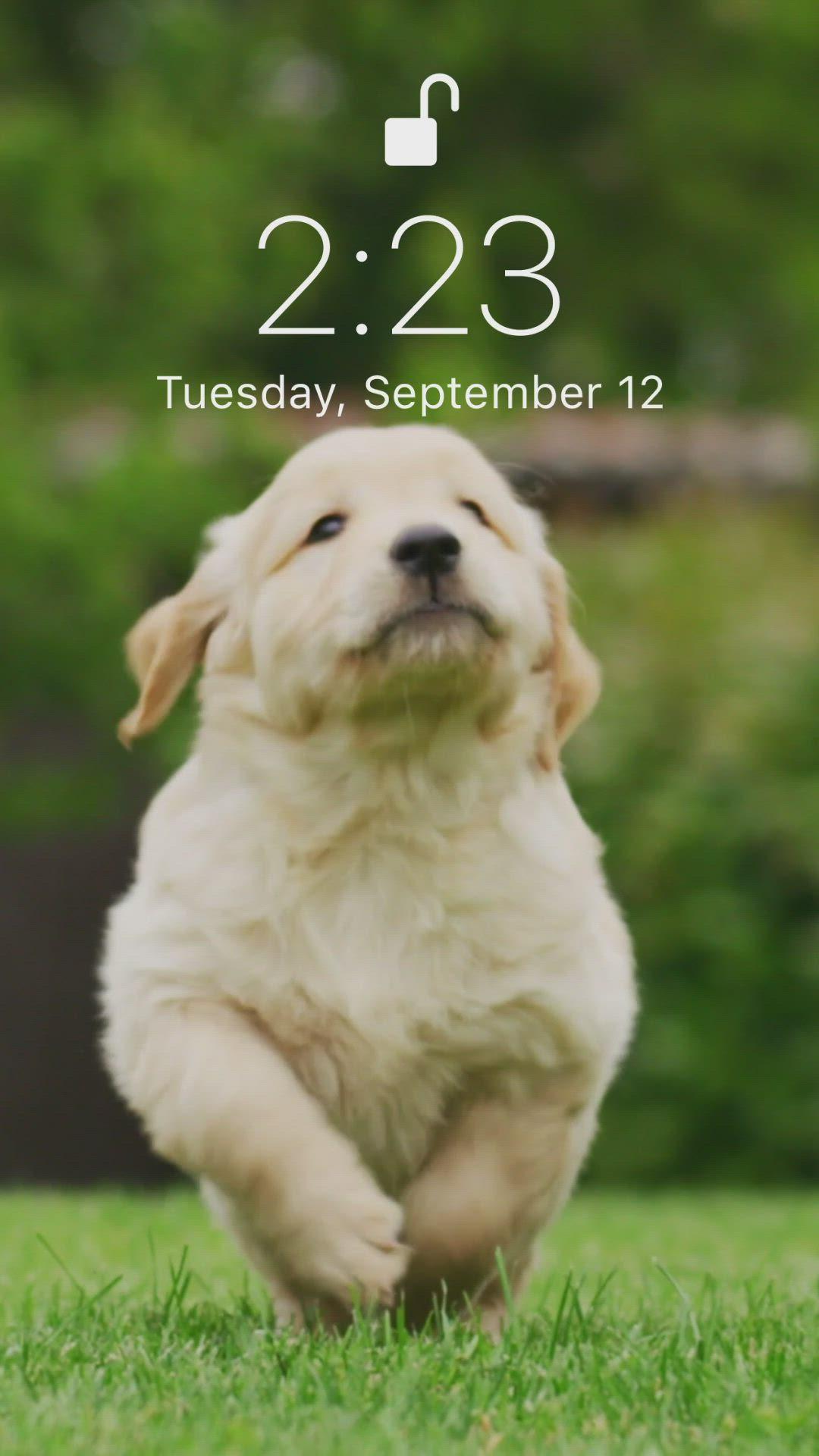 Puppyyy Video Dog Wallpaper Iphone Galaxy Wallpaper Cute Dog Wallpaper