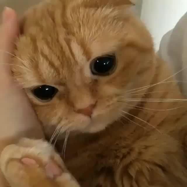 Кот плачет анимация