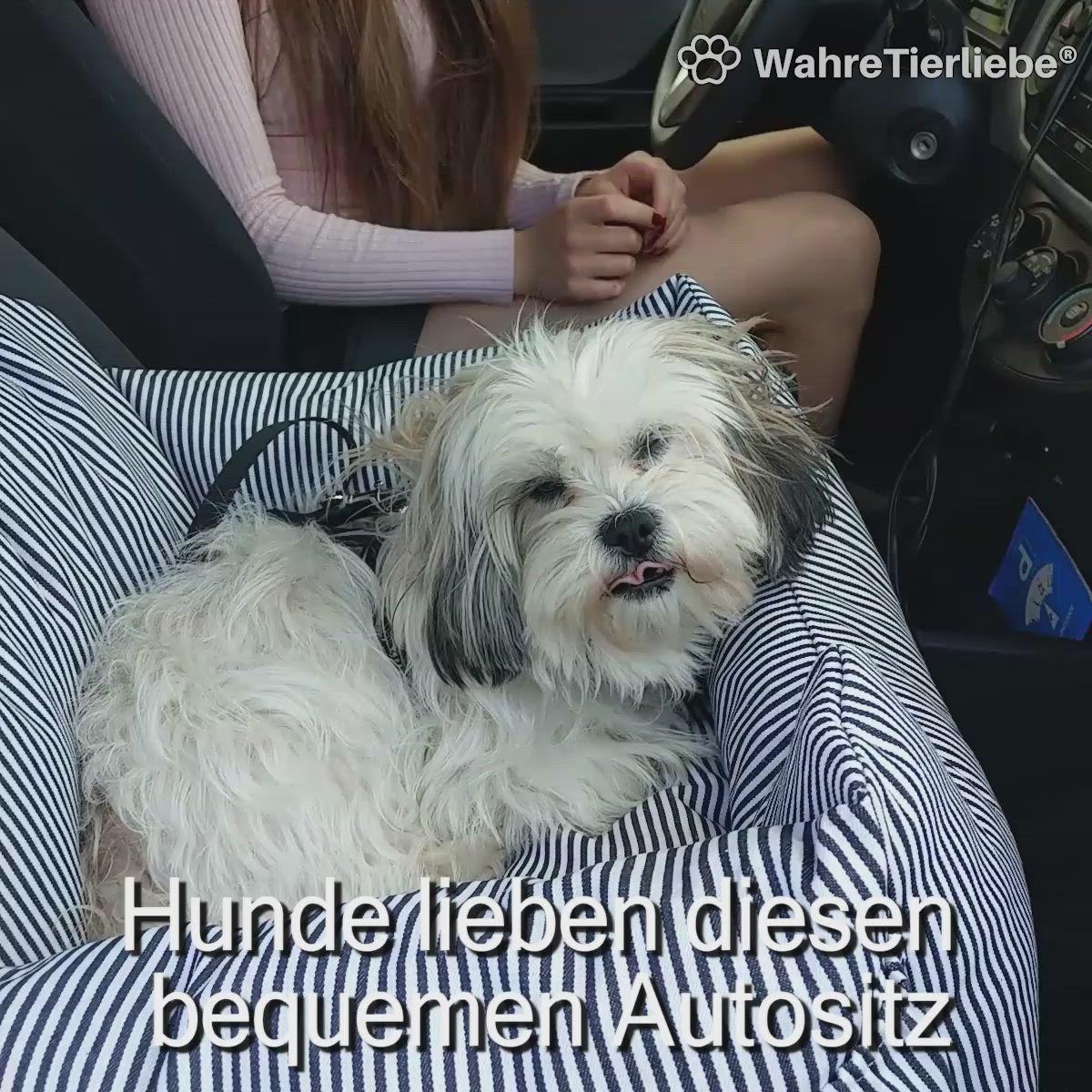Vierbeiner Lieben Diesen Autositz Video In 2020 Hunde Hund Auto Hunde Welpen Erziehung