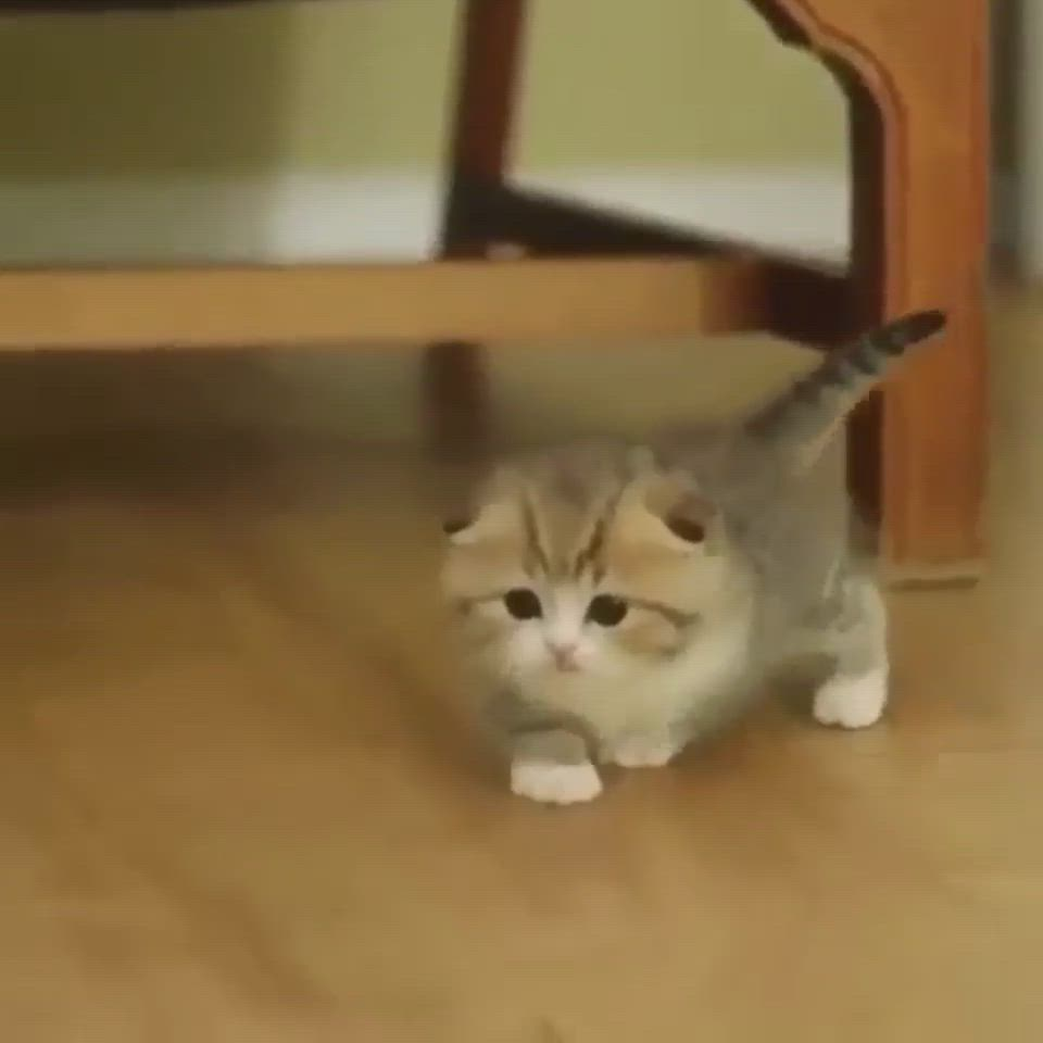 Walk Like A Lion Own The Place Even If You Fit In A Cup Video In 2020 Cute Animals Kittens Cutest Cute Baby Animals