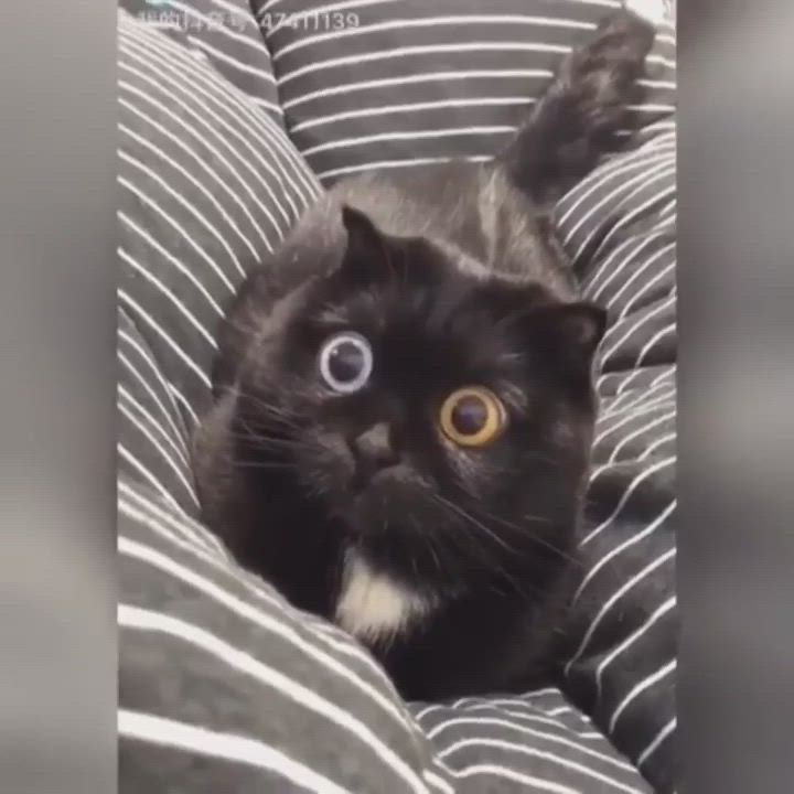 Maybe Just A Little Too Much Catnip Video Cute Baby Animals Cute Animals Cute Funny Animals