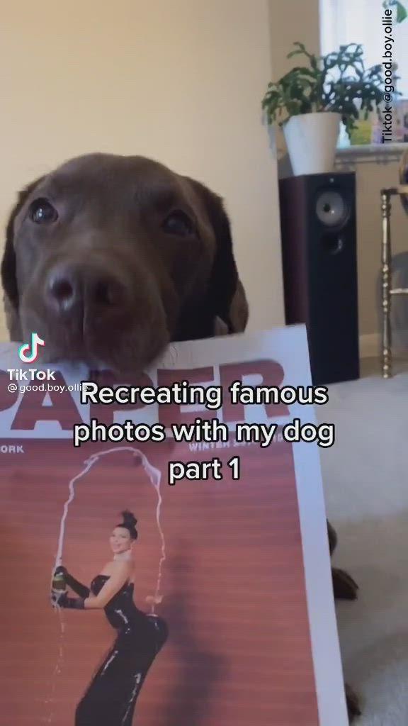 Pinterest Babssterkens Video In 2021 I Wish I Had Funny I Wish