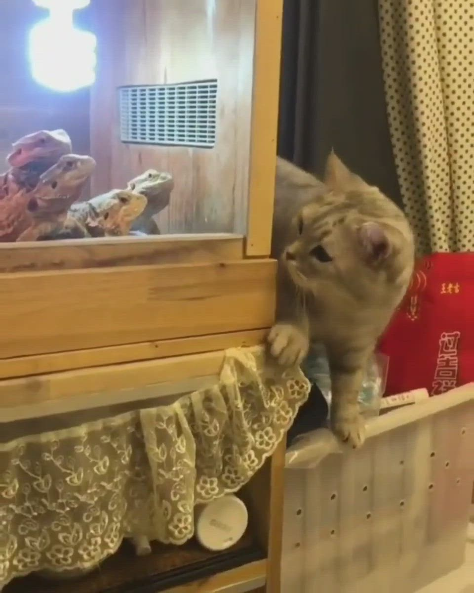 The Cat Is Playing With The Snake Video In 2020 Funny Animals Cute Animals Funny Animal Images