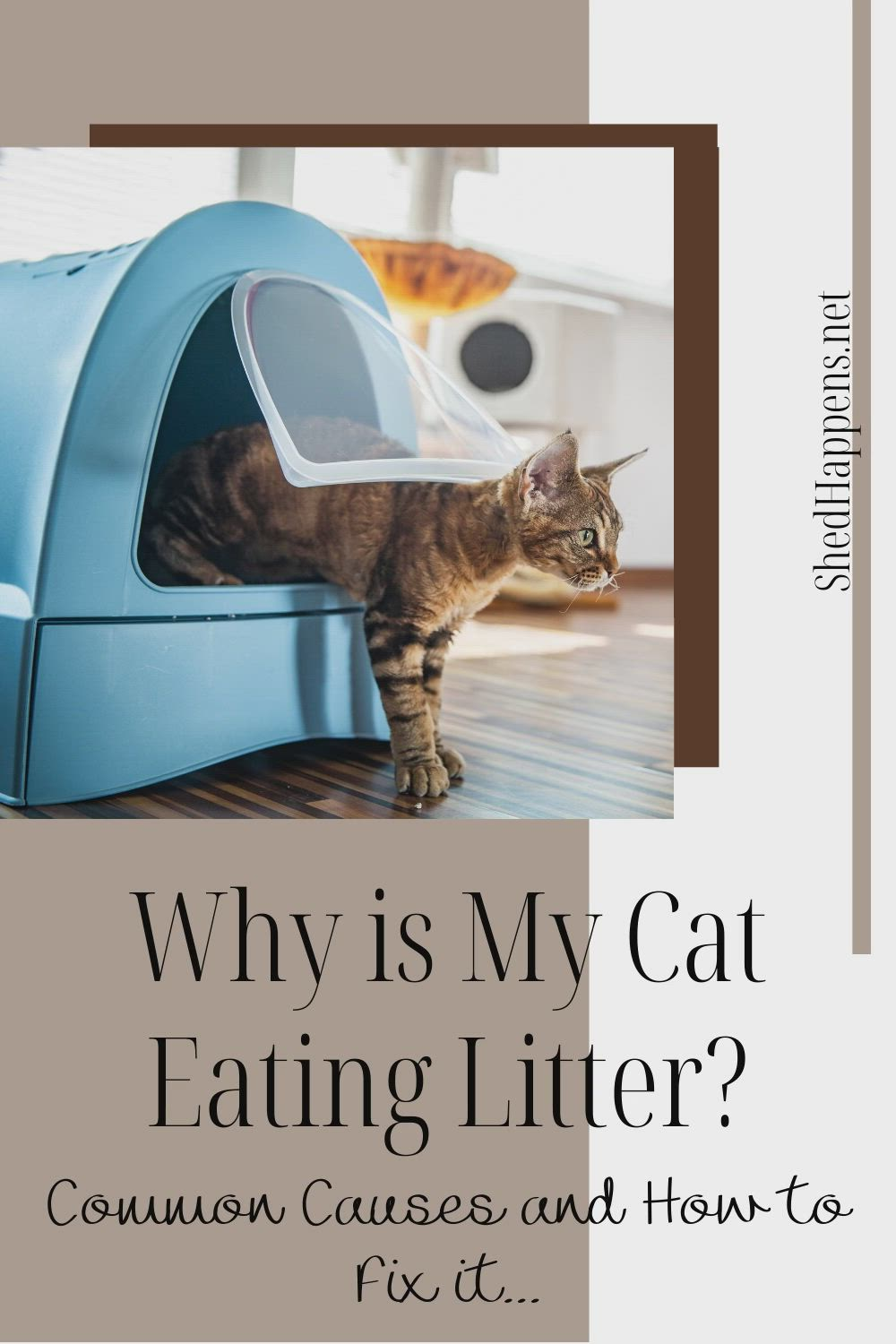 Is Your Cat Eating Litter Here S How To Stop It Video In 2020 Cat Health Care Cat Health Problems Litter