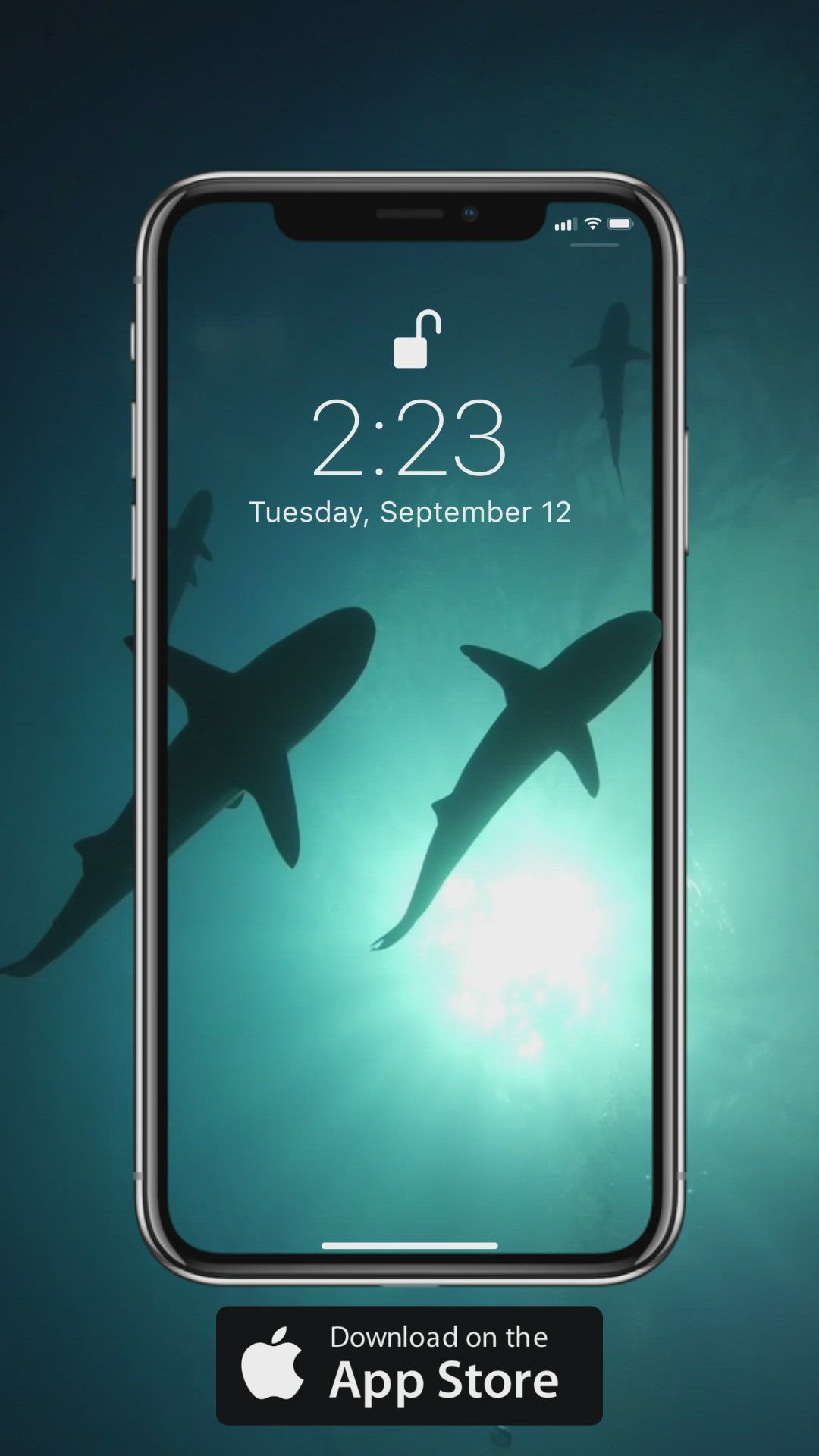 Underwater Wallpaper Video Underwater Wallpaper Shark Wallpaper Iphone Iphone Wallpaper Video