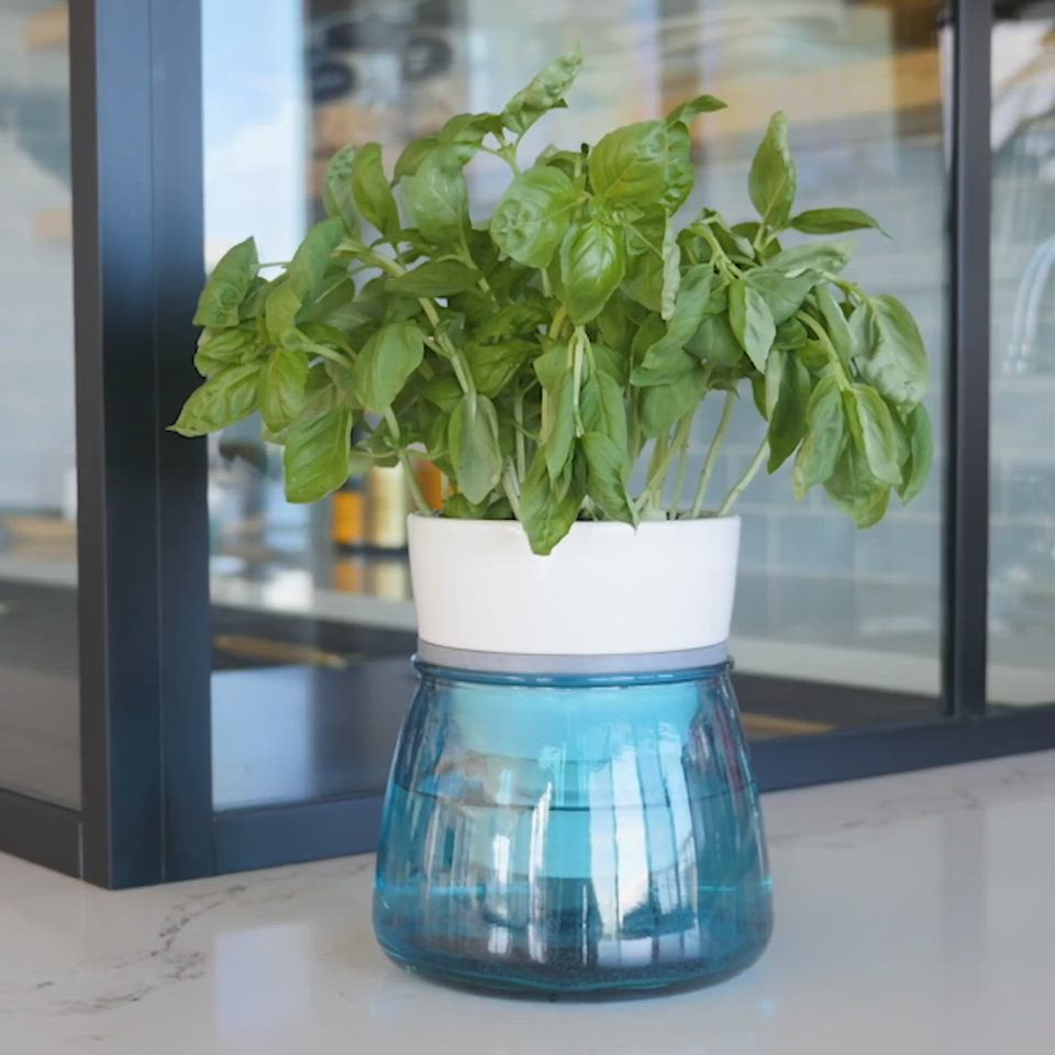 Livana Home Ceramic Self Watering Herb Pot Video Video With