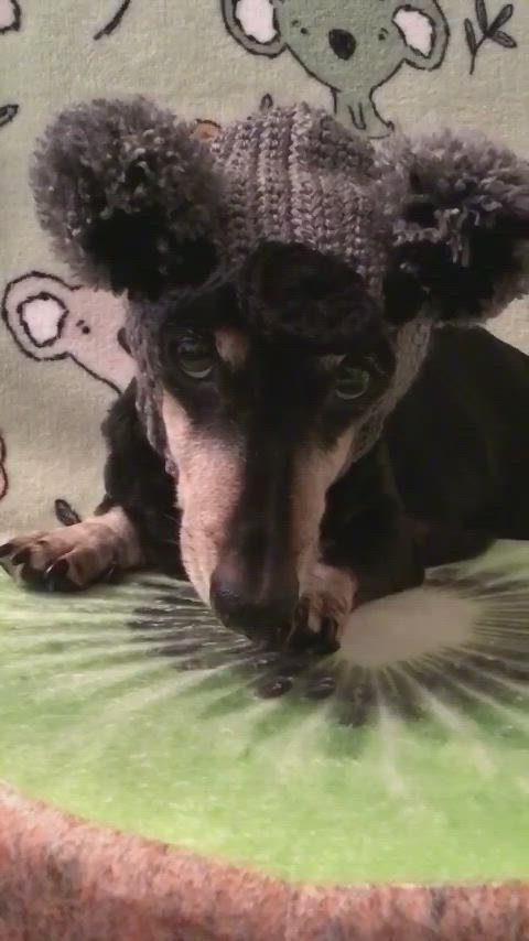 Koala Snood Video In 2020 Dog Beanie Dog Clothes Crochet Dog