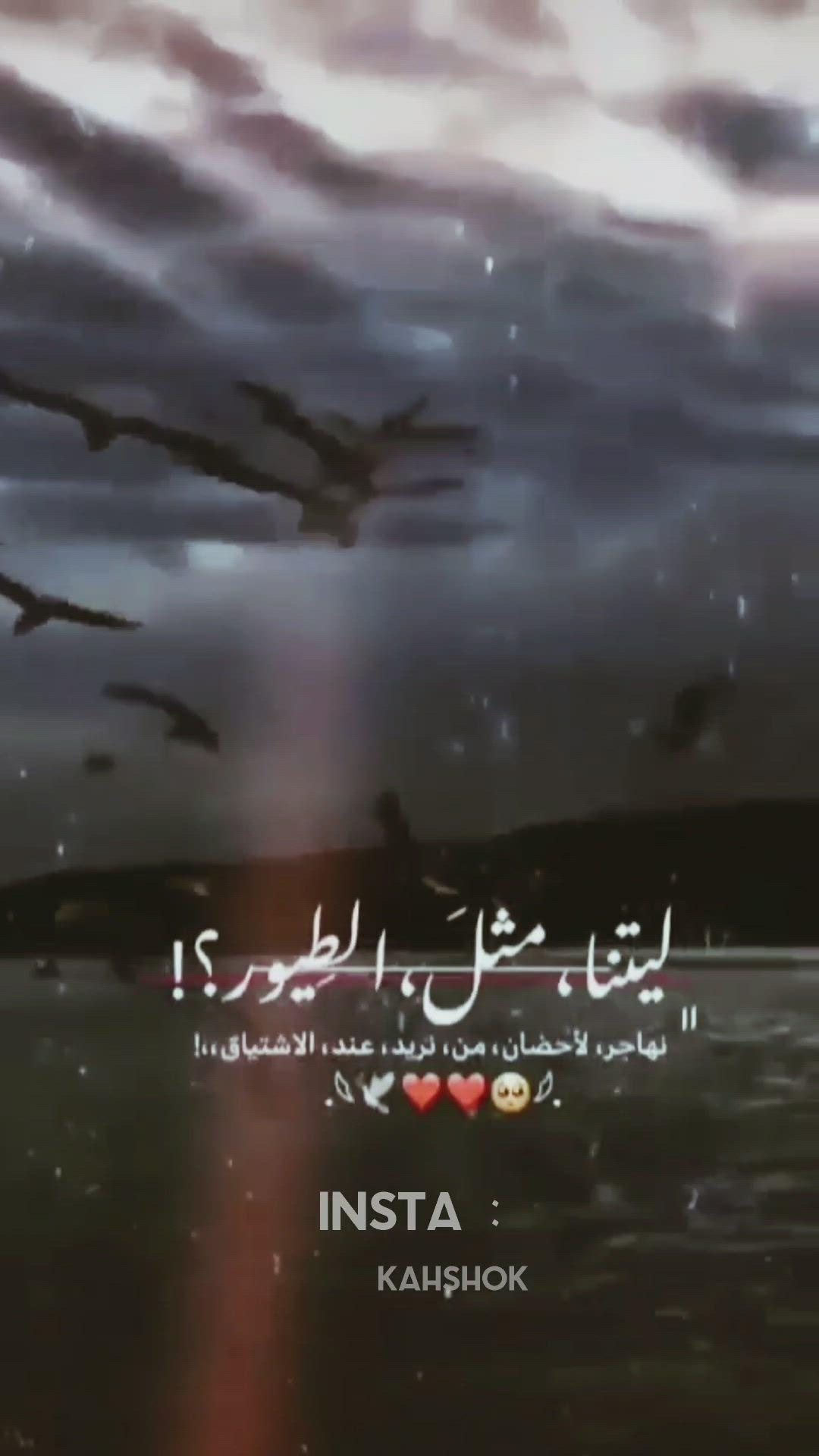ليتنا مثل الطيور Video Love Quotes Wallpaper Iphone Wallpaper Quotes Love Beautiful Love Images