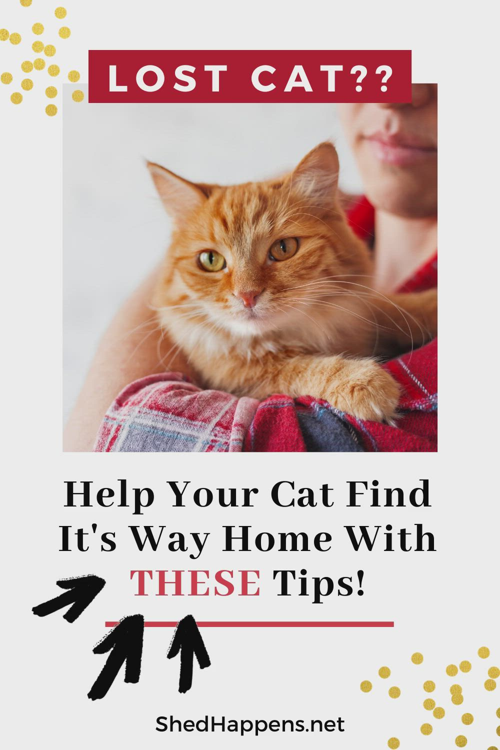 Click Here For Tips Tricks To Find Your Lost Cat Video In 2020 Lost Cat Cats Cat Shedding