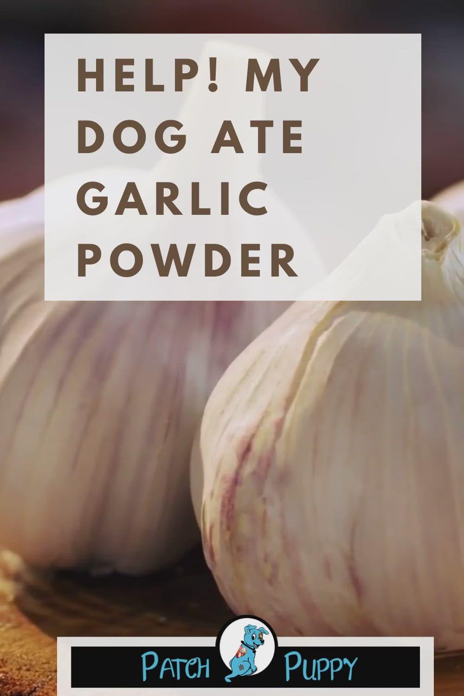 Help! My Dog Ate Garlic Powder
