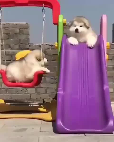 Watch This Fluffy Boy Go Down A Slide Cute Baby Animals