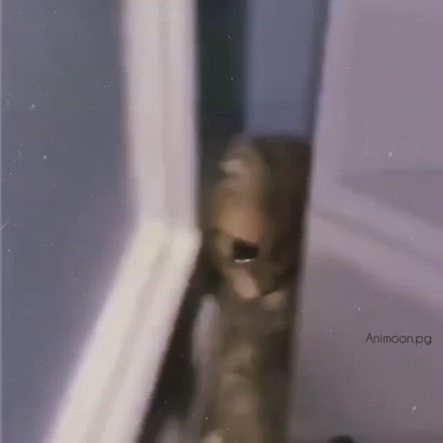 Kiyamam Video In 2021 Cute Animals Videos Animals