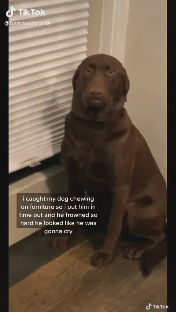 Pin By Bella On Funny Video Cute Funny Animals Cute Funny Dogs Animal Jokes