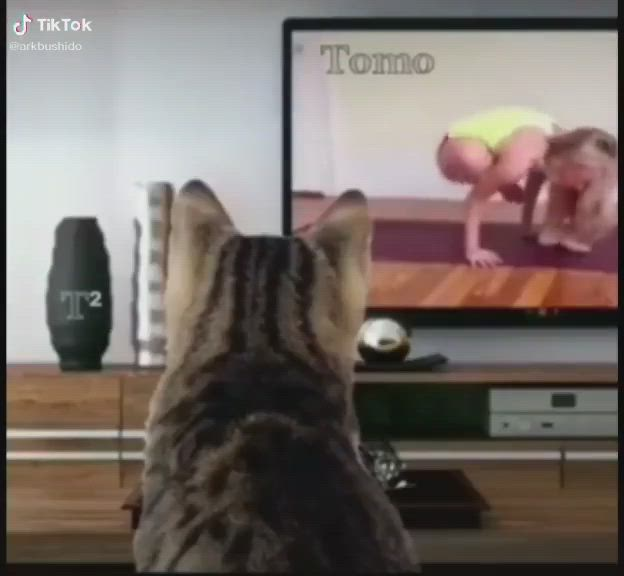 Join To Me Video Funny Animal Videos Funny Cat Videos Funny Animals