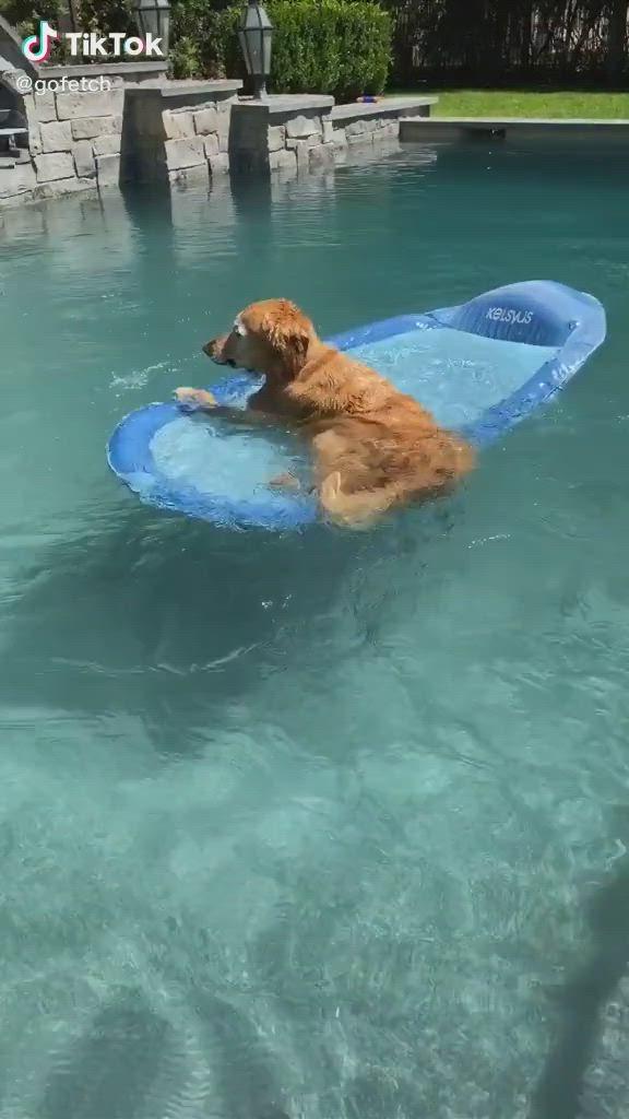Cute Dog Video Dog Swimming Pools Cute Animals Dog Pool