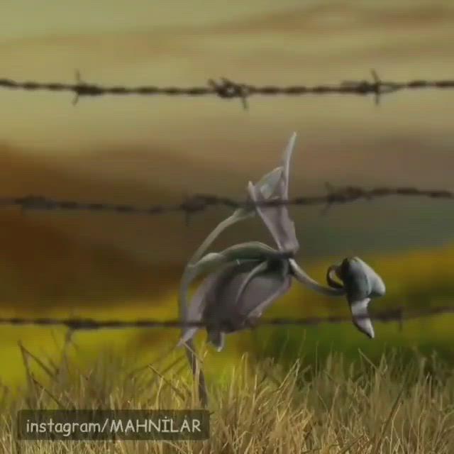 Pin By Qarabag Azərbaycanindir On Video Video Animated Love Images Love Images Image