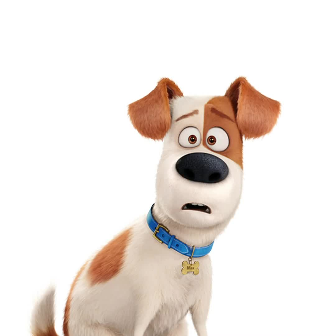 Neurotic Who S Neurotic Max Is The Pets Return This Summer In The New Movie Thesecretlifeofpets2 Coming To Theate Video Secret Life Of Pets Secret Life Pet Max