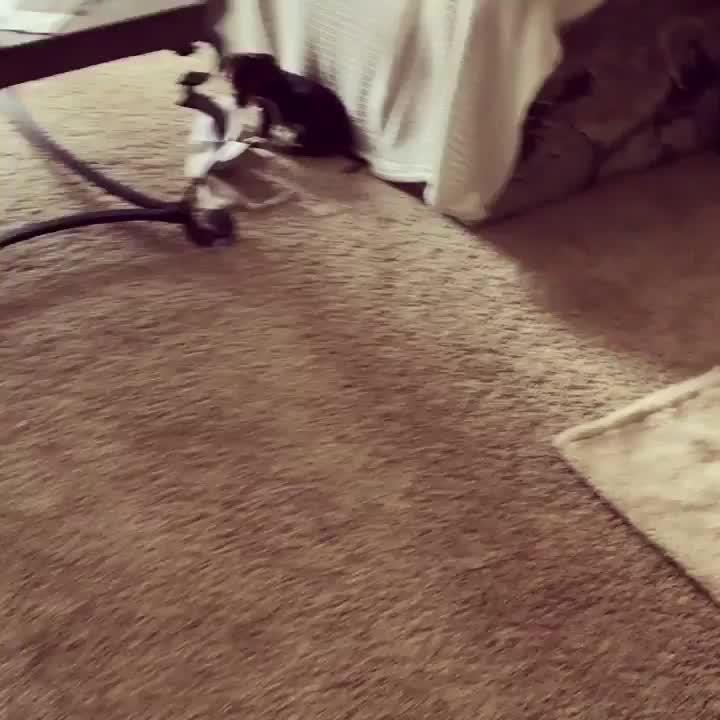 Pin Auf Cute Dachshund Puppies