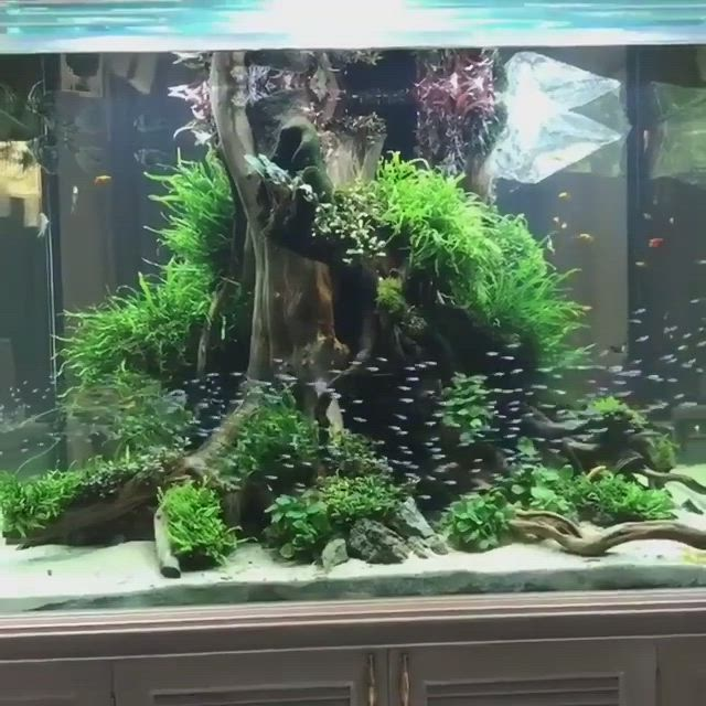 A Beautiful Schooling Fish In Tanks Video Freshwater Aquarium Fish Aquarium Fish Aquarium Decorations