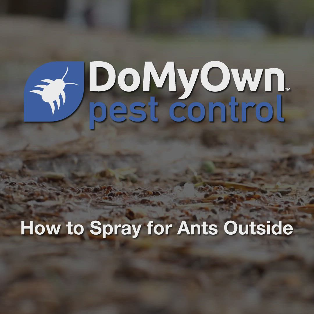 How To Spray For Ants Outside Video In 2020 Ant Spray Ants Spray