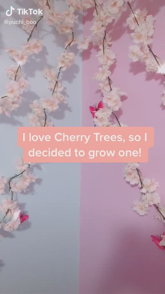 Cherry Tree Video In 2021 Cool Things To Buy Hunter Anime Art Tips