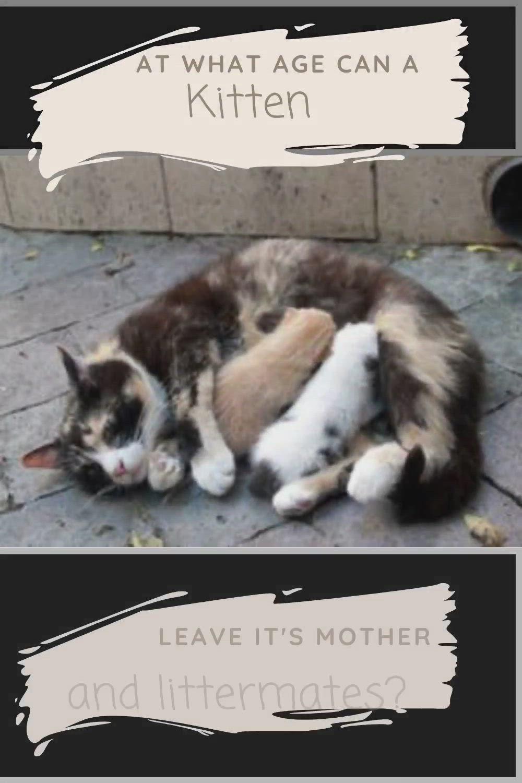 Pin On Cat Improvements