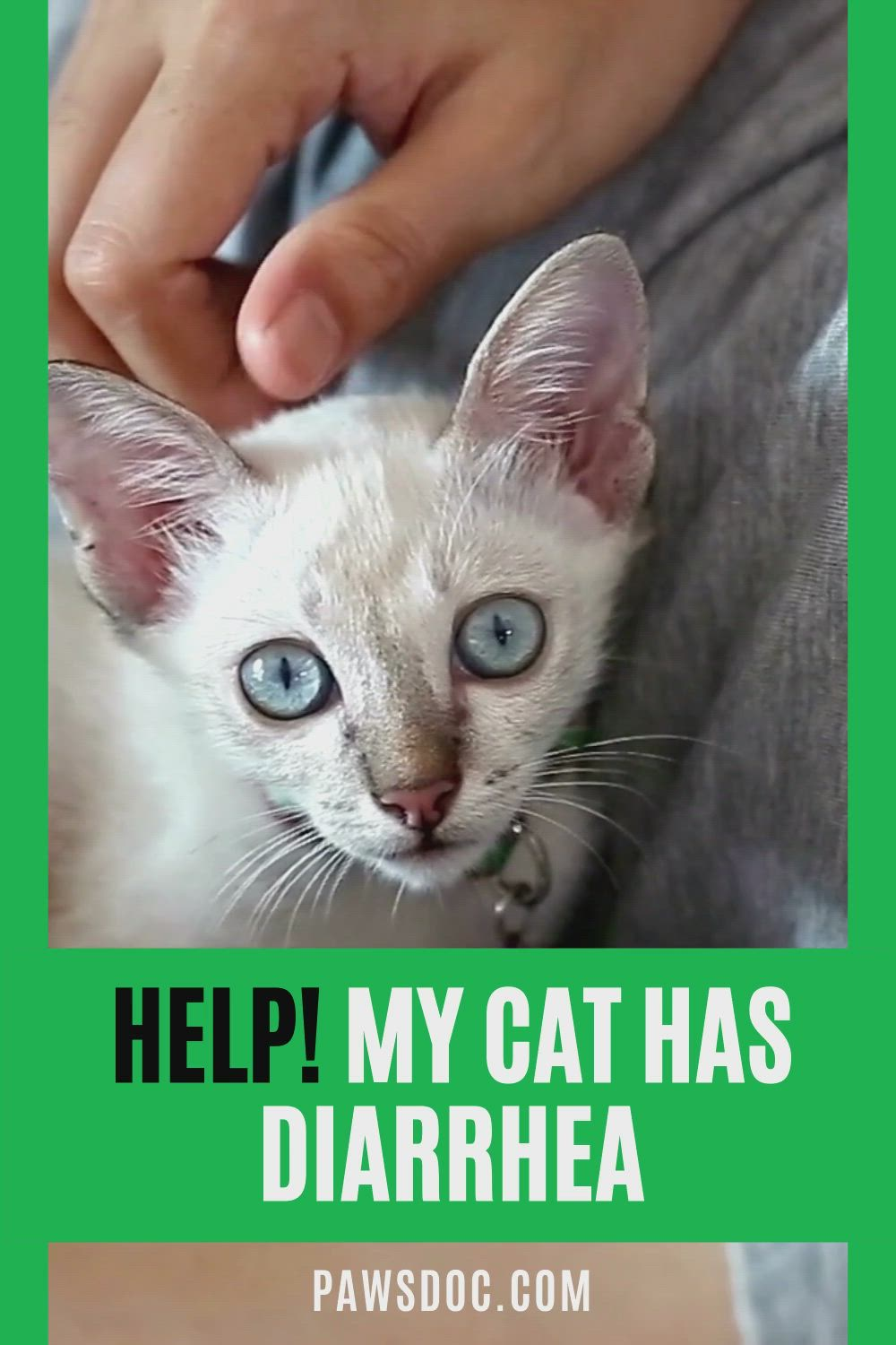 Pin On Cat Health Tips And Information