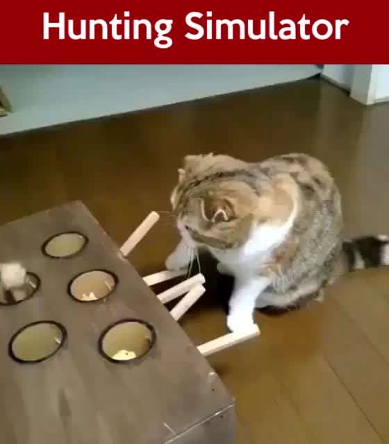Whack A Mole Cat Toy Video Cute Funny Animals Cute Animals